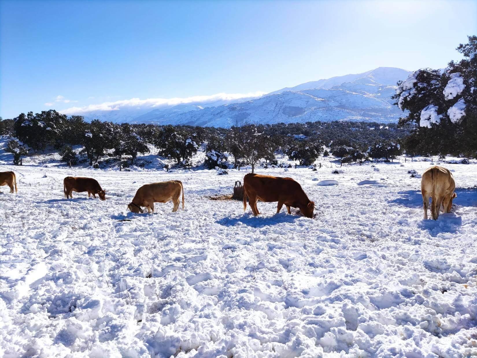 Casas Rurales Para Familias Filomena